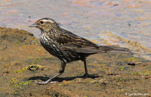 Image, 2012, Nisqually NWR, Washington, click to enlarge