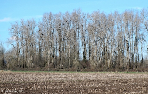 Image, 2014, Woodland Bottoms, Washington, click to enlarge